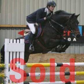 Amos, Show jumper