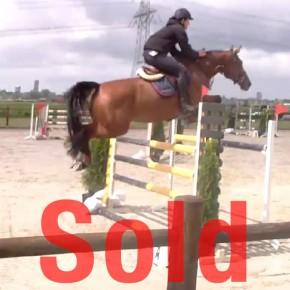 Amyra, Jumping horse
