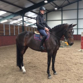 Show jumping horse for the future for sale