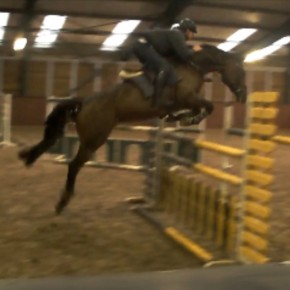 Bella dona, careful show horse
