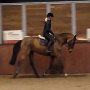Amateur horse for sale