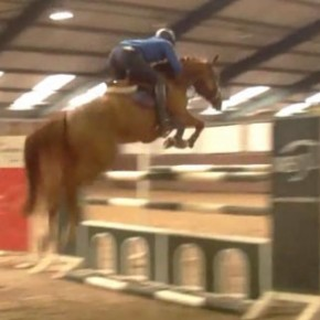 Brave jumping horse for sale